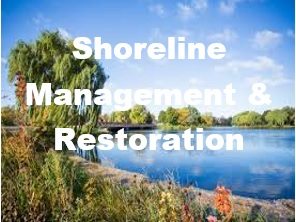 Shoreline Management & Restoration